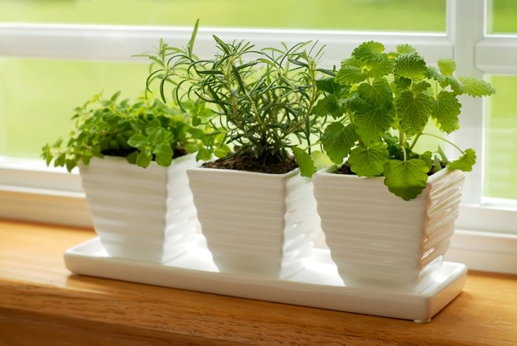 6 Edible Plants You Can Grow Inside