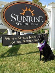 "Meet House Dog ""Lula Bell"" at Sunrise of Louisville, KY!"