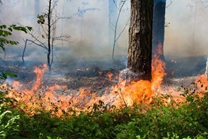 Wildfire Preparedness Tips for Older Adults
