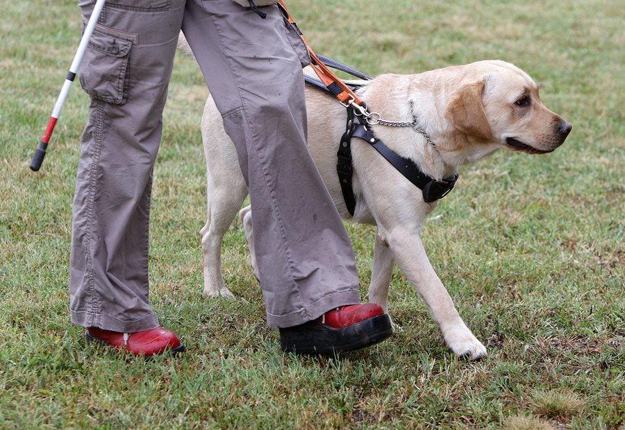 How Do Assistance Dogs Improve Quality Of Life For People
