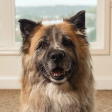 Moose, Sunrise of Mercer Island Community Dog