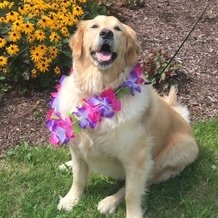 Sunrise of Schaumburg Community Dog Molly